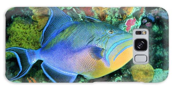 Queen Triggerfish Galaxy Case