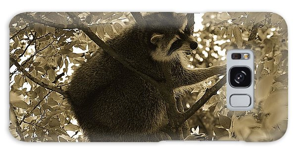 Raccoon  Galaxy Case