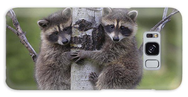 Galaxy Case featuring the photograph Raccoon Two Babies Climbing Tree North by Tim Fitzharris