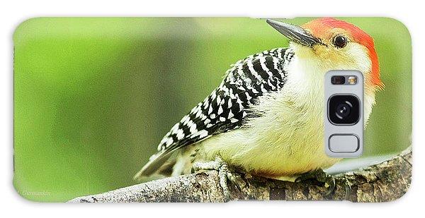 Red Bellied Woodpecker, Male, Animal Portrait Galaxy Case