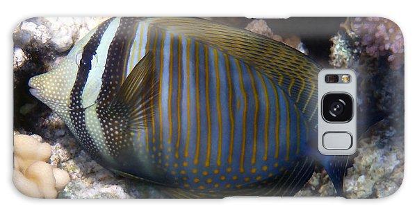 Red Sea Sailfin Tang  Galaxy Case