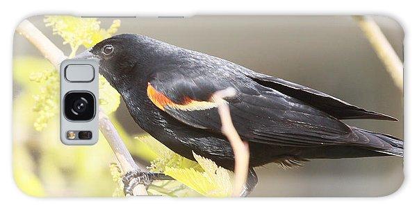 Red Wing Blackbird Galaxy Case