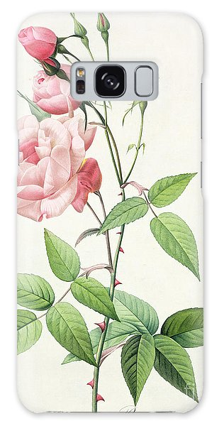 Botanical Garden Galaxy Case - Rosa Indica Vulgaris by Pierre Joseph Redoute