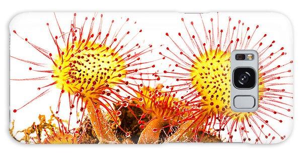 Round-leaved Sundew Drosera Rotundifolia Galaxy Case by Gabor Pozsgai