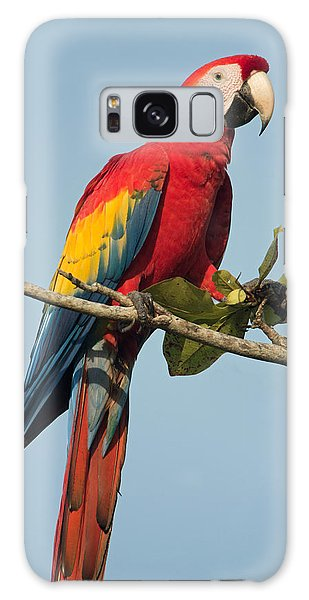 Macaw Galaxy Case - Scarlet Macaw Ara Macao, Tarcoles by Panoramic Images
