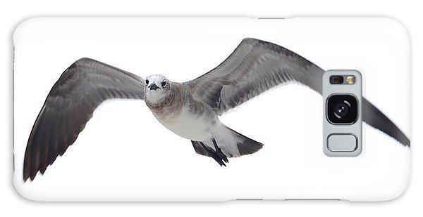 Sea Gull Galaxy Case