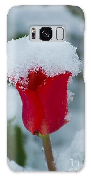 Snowy Red Riding Hood Galaxy Case