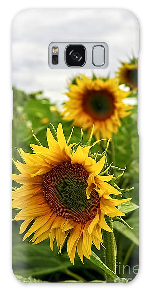 Sunflower Field Galaxy Case