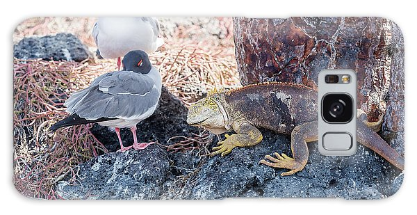 Swallow Tailed Gull And Iguana On  Galapagos Islands Galaxy Case