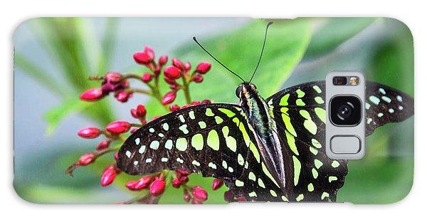 Galaxy Case featuring the photograph Tailed Green Jay Butterfly  by Saija Lehtonen