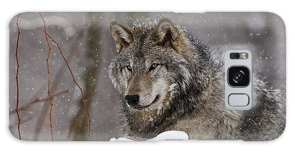 Timber Wolf In Winter Galaxy Case