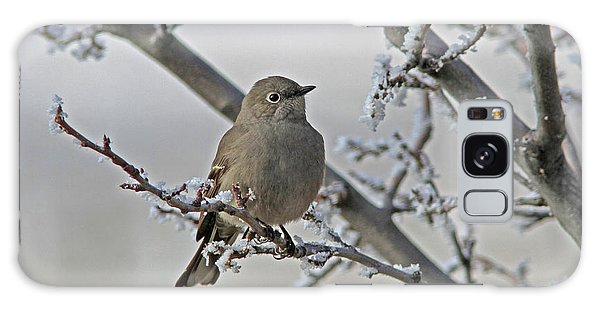 Townsend's Solitaire Galaxy Case