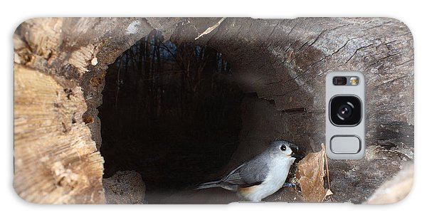 Tufted Titmouse In A Log Galaxy Case