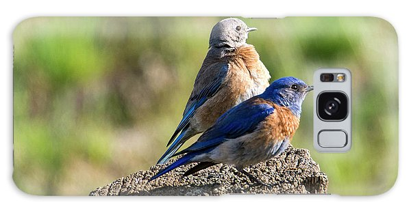 Western Bluebird Pair Galaxy Case