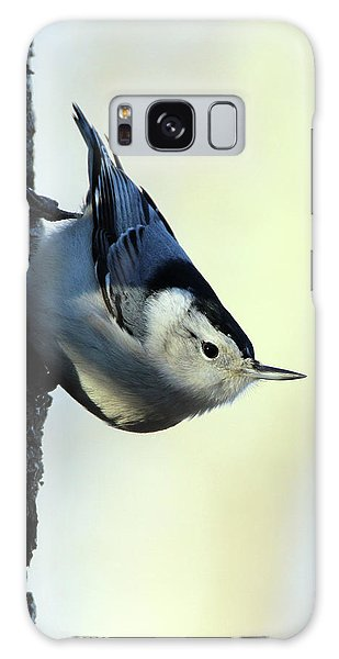 White Breasted Nuthatch Wading River New York Galaxy Case by Bob Savage