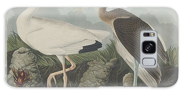 Ibis Galaxy S8 Case - White Ibis by Dreyer Wildlife Print Collections