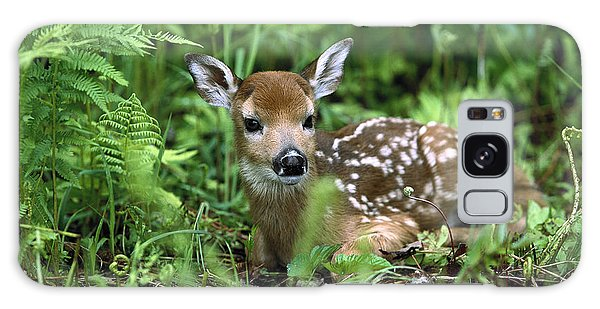 White-tailed Deer Odocoileus Galaxy Case