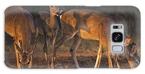 Whitetail Deer At Waterhole Texas Galaxy Case