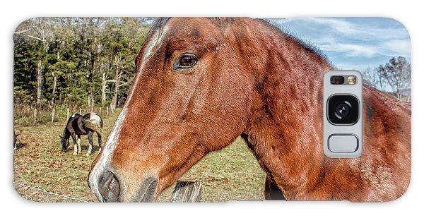 Wild Horse In Smoky Mountain National Park Galaxy Case