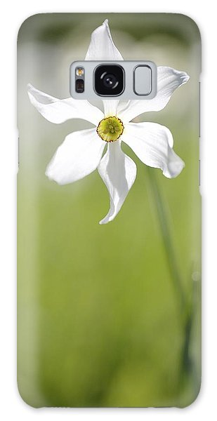 Wild Narcissus Glowing In Sunlight Galaxy Case by Colleen Williams