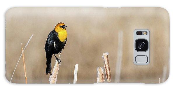 Yellow Headed Blackbird Galaxy Case
