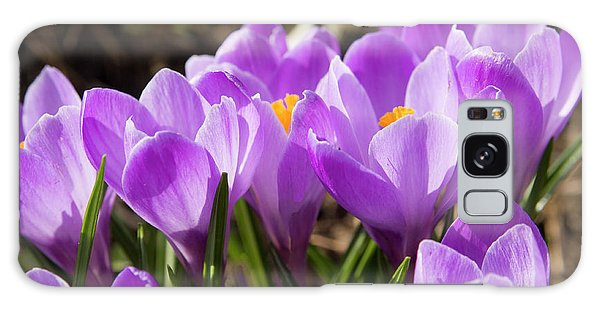 Purple Crocuses Galaxy Case