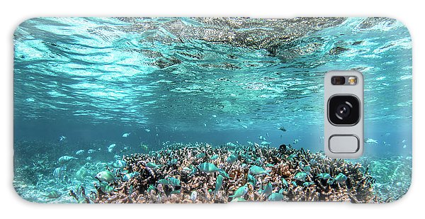 Underwater Coral Reef And Fish In Indian Ocean, Maldives. Galaxy Case