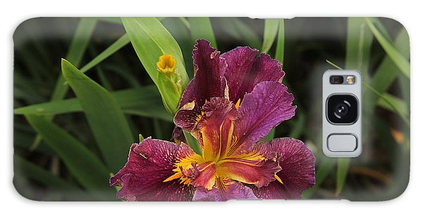 Louisiana Iris Galaxy Case by Ronald Olivier
