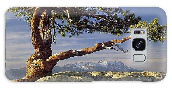 1m6701 Historic Jeffrey Pine Sentinel Dome Yosemite Galaxy Case