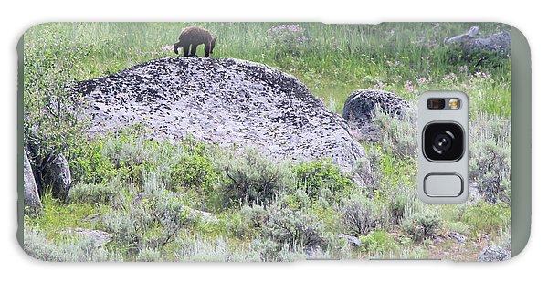 American Black Bear Yellowstone Usa Galaxy Case