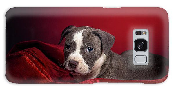 American Pitbull Puppy Galaxy Case