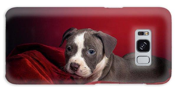 American Pitbull Puppy Galaxy Case