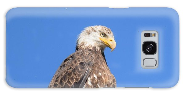 Bald Eagle Juvenile Perched Galaxy Case