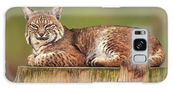 Bobcat  Galaxy Case