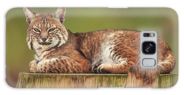 Bobcat  Galaxy Case