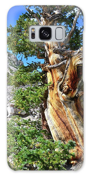 Bristlecone Loop Trail Galaxy Case