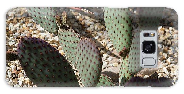 Cacti Galaxy Case