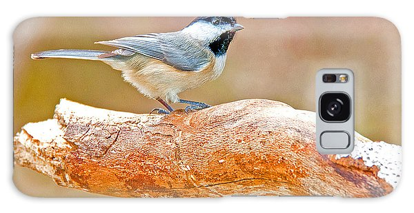 Galaxy Case - Carolina Chickadee On Tree Limb by A Gurmankin