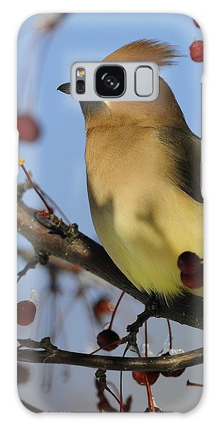 Cedar Waxwing... Galaxy Case