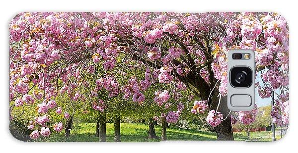 Cherry Blossom Tree Galaxy Case by Colin Rayner