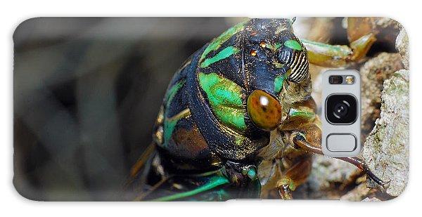 Cicada Galaxy Case