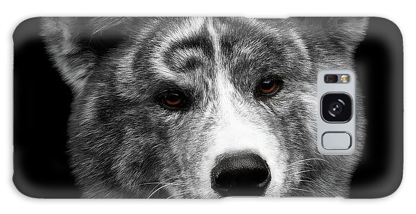 Dog Galaxy S8 Case - Closeup Portrait Of Akita Inu Dog On Isolated Black Background by Sergey Taran