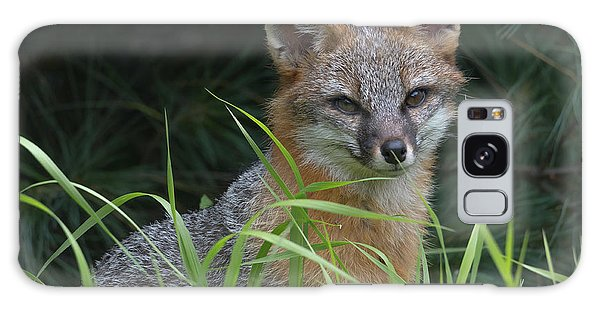 Gray Fox In The Grass Galaxy Case