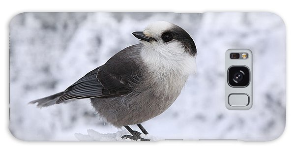 Gray Jay - White Mountains New Hampshire Usa Galaxy Case