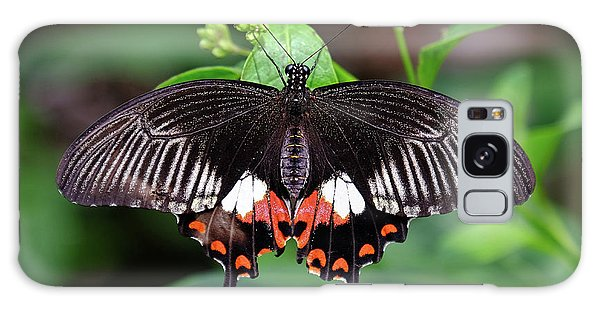 Great Mormon Butterfly Galaxy Case by Ronda Ryan
