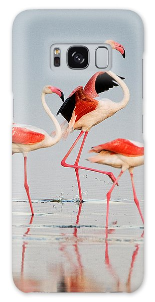 Greater Flamingos Phoenicopterus Roseus Galaxy Case by Panoramic Images