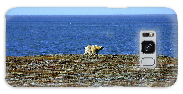 Polar Bear Galaxy Case