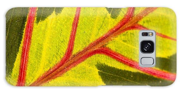 Prayer Plant Maranta Leuconeura Galaxy Case by Gabor Pozsgai