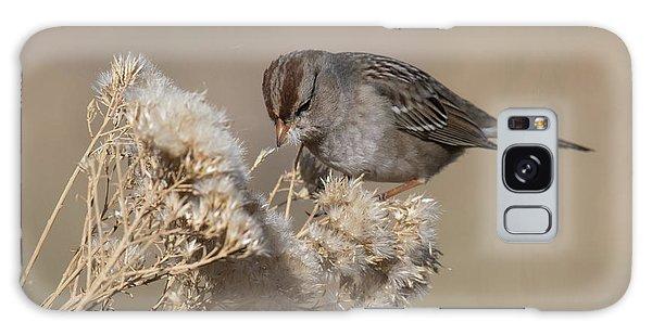 Sparrow Galaxy Case