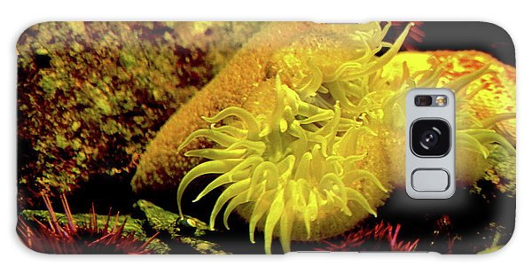 Sea Urchins Galaxy Case